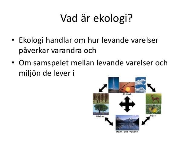 vad är ekologi