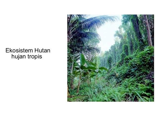 Ekologi Hewan