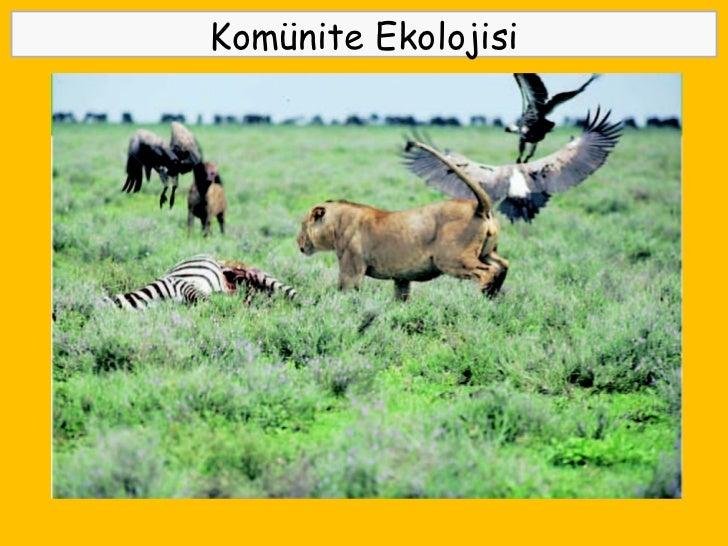 Abiyotik faktörler ve bunların habitat üzerindeki etkisi
