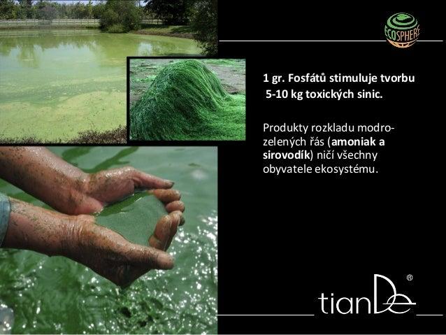 1 gr. Fosfátů stimuluje tvorbu 5-10 kg toxických sinic. Produkty rozkladu modro- zelených řás (amoniak a sirovodík) ničí v...