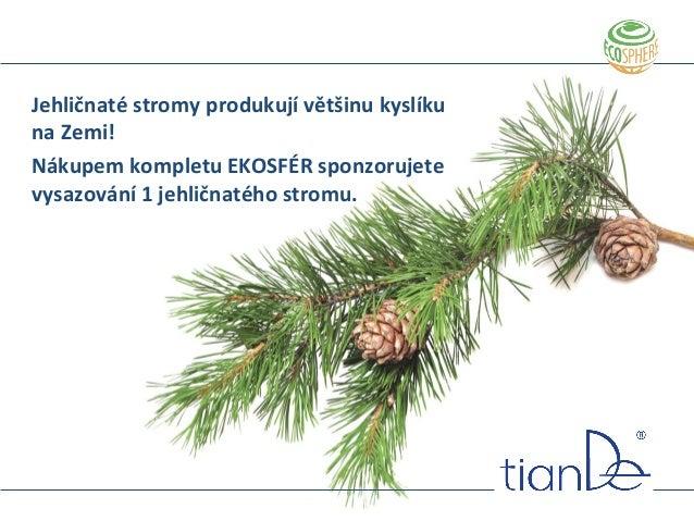 Jehličnaté stromy produkují většinu kyslíku na Zemi! Nákupem kompletu EKOSFÉR sponzorujete vysazování 1 jehličnatého strom...