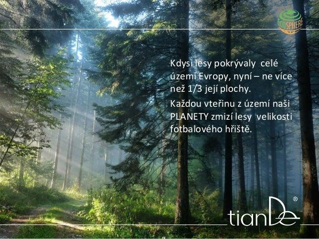 Kdysi lesy pokrývaly celé území Evropy, nyní – ne více než 1/3 její plochy. Každou vteřinu z území naši PLANETY zmizí lesy...