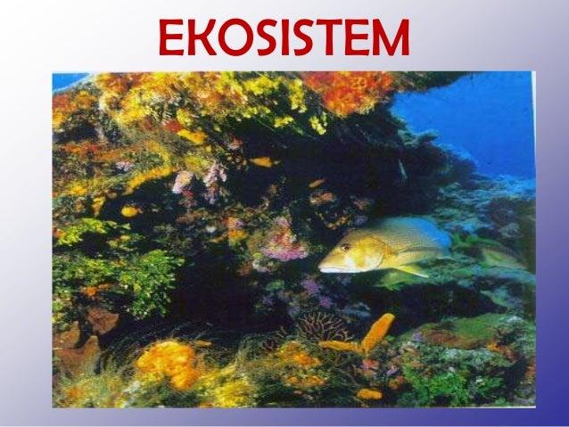 Ekosistem. Materi ekosistem untuk kelas VII SMP, semoga bermanfaat. Slide 2