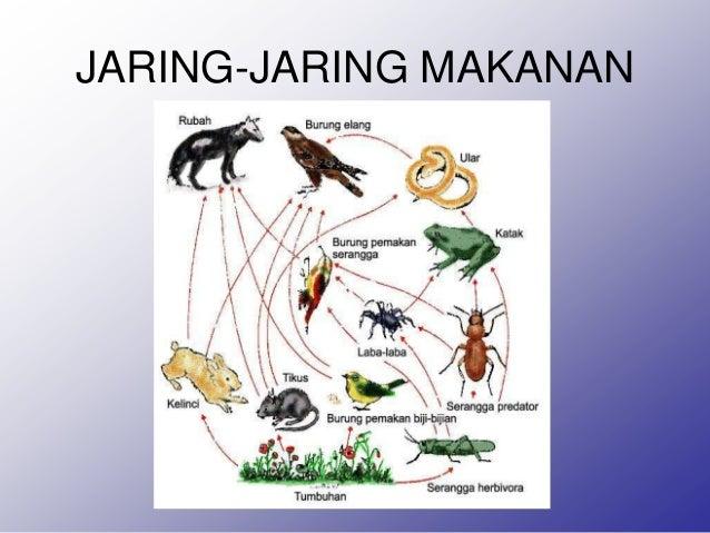Ekosistem Materi Ekosistem Untuk Kelas Vii Smp Semoga