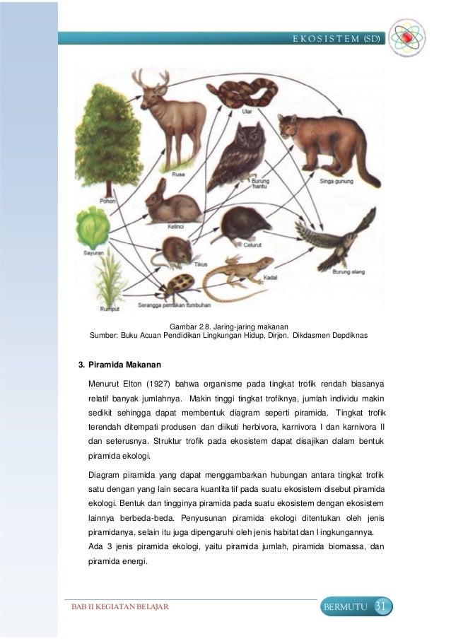 Ekosistem 35 a ccuart Gallery