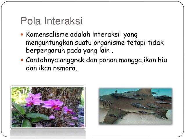 Contoh Ekosistem Dan Komponen Nya Sinter B