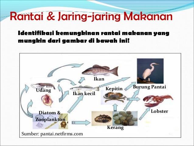 Image Result For Gambar Ekosistem Katak