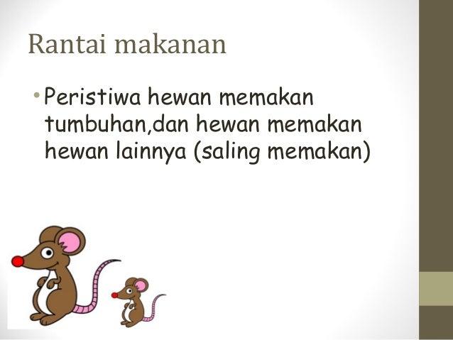 Rantai makanan• Peristiwa hewan memakan  tumbuhan,dan hewan memakan  hewan lainnya (saling memakan)