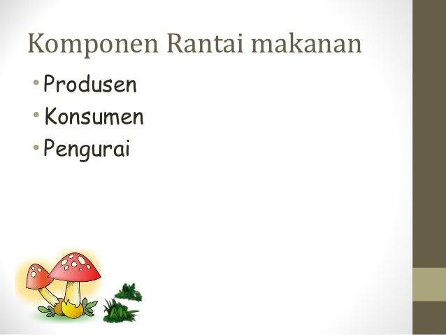 Komponen Rantai makanan• Produsen• Konsumen• Pengurai