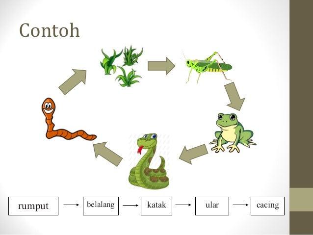 Contohrumput   belalang   katak   ular   cacing