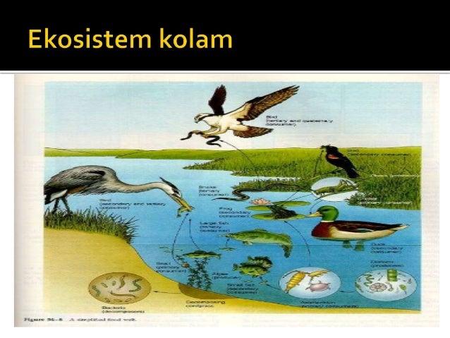 Contoh Ekosistem Kolam Contoh Si
