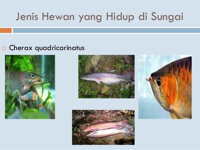 82 Koleksi Gambar Hewan Yang Hidup Di Sungai HD Terbaik