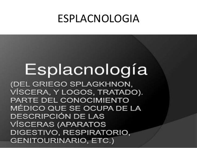 ESPLACNOLOGIA