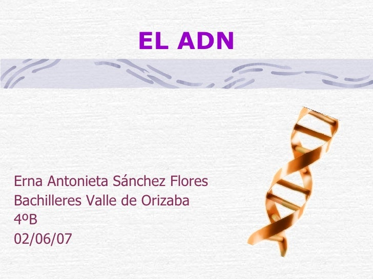 EL ADN Erna Antonieta Sánchez Flores Bachilleres Valle de Orizaba 4ºB 02/06/07