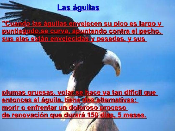 """Las águilas """"Cuando las águilas envejecen su pico es largo y  puntiagudo,se curva, apuntando contra el pecho,  sus al..."""