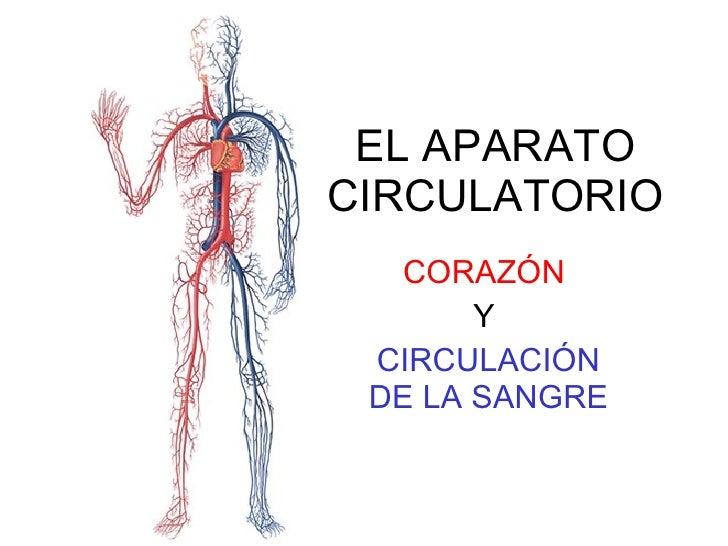 EL APARATO CIRCULATORIO CORAZÓN   Y  CIRCULACIÓN DE LA SANGRE