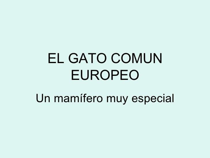 EL GATO COMUN EUROPEO Un mamífero muy especial