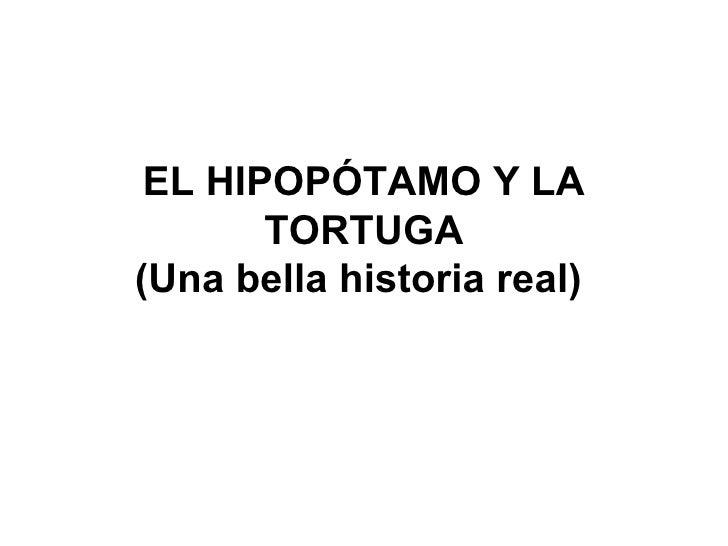 EL HIPOPÓTAMO Y LA TORTUGA (Una bella historia real)