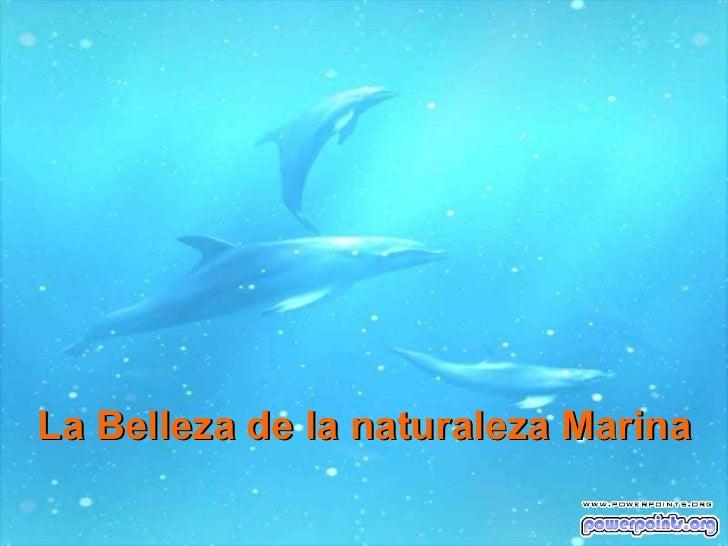 La Belleza de la naturaleza Marina