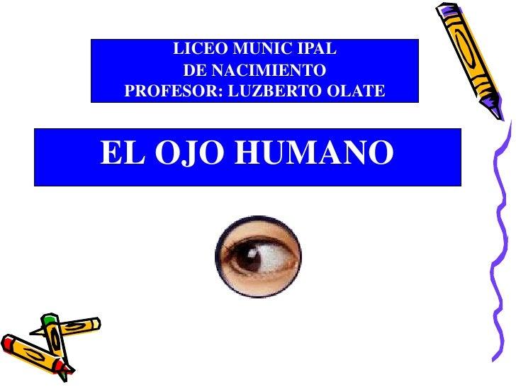 LICEO MUNIC IPAL      DE NACIMIENTO PROFESOR: LUZBERTO OLATEEL OJO HUMANO