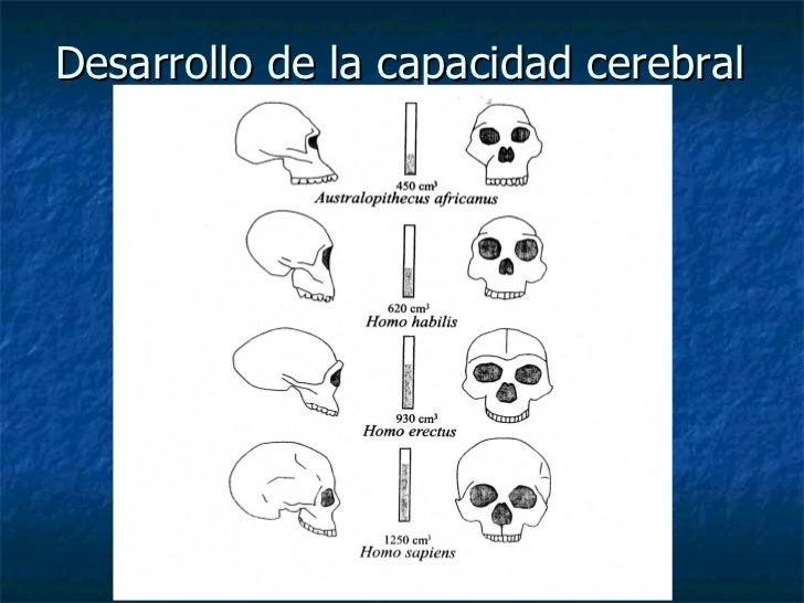 Desarrollo de la capacidad cerebral