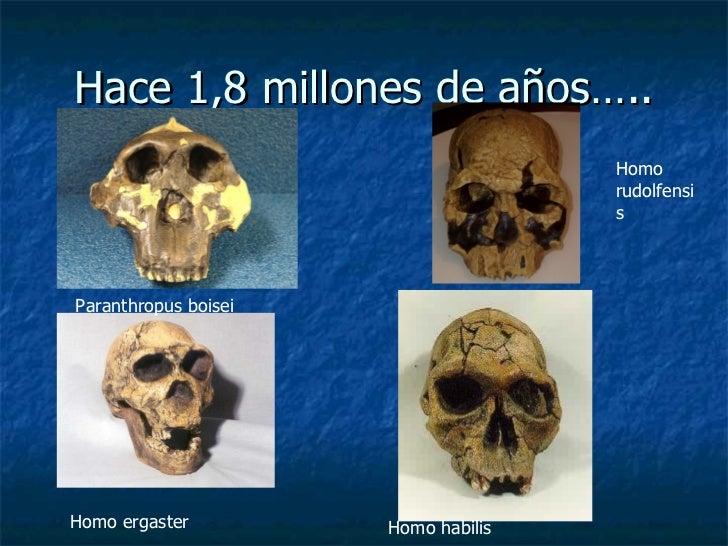 Hace 1,8 millones de años….. Paranthropus boisei Homo  rudolfensis Homo ergaster Homo habilis