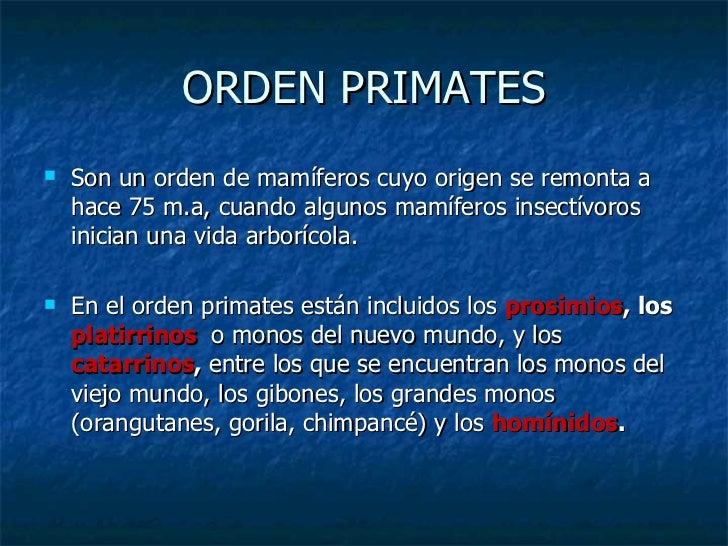 ORDEN PRIMATES <ul><li>Son un orden de mamíferos cuyo origen se remonta a hace 75 m.a, cuando algunos mamíferos insectívor...