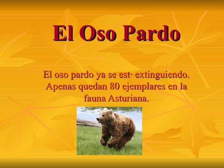 El Oso Pardo El oso pardo ya se está extinguiendo. Apenas quedan 80 ejemplares en la fauna Asturiana.
