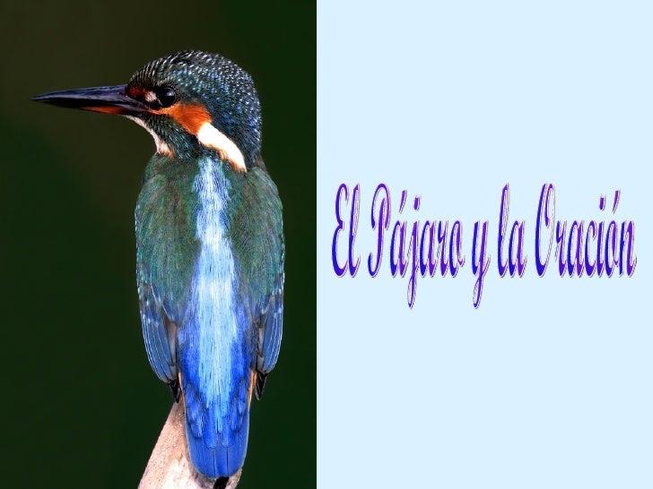 El Pájaro y la Oración