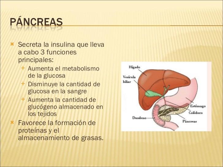 <ul><li>Secreta la insulina que lleva a cabo 3 funciones principales:  </li></ul><ul><ul><li>Aumenta el metabolismo de la ...
