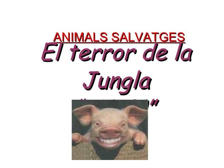 """ANIMALS SALVATGES El terror de la Jungla """" IVAN"""""""