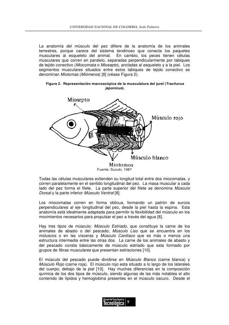 Elaboracion de embutidos de tilapia