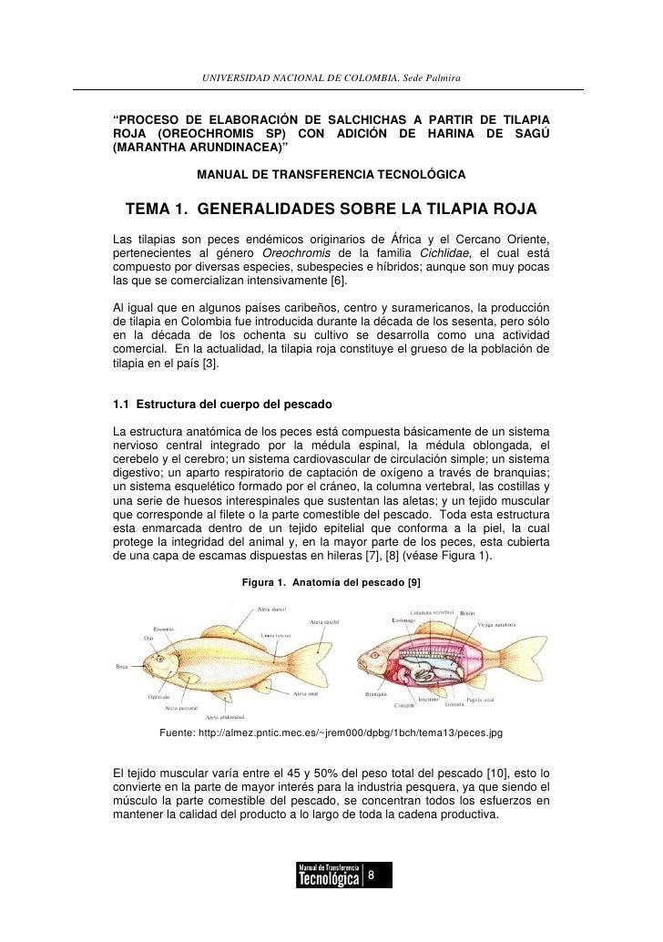 Moderno Anatomía Interna De Los Peces Tilapia Colección - Imágenes ...