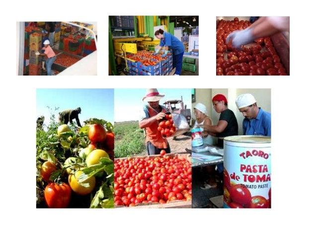 Circuito Productivo Del Tomate : Elaboracion de la salsa tomate