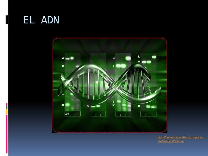 EL ADN<br />http://lasteologias.files.wordpress.com/2008/11/adn.jpg<br />