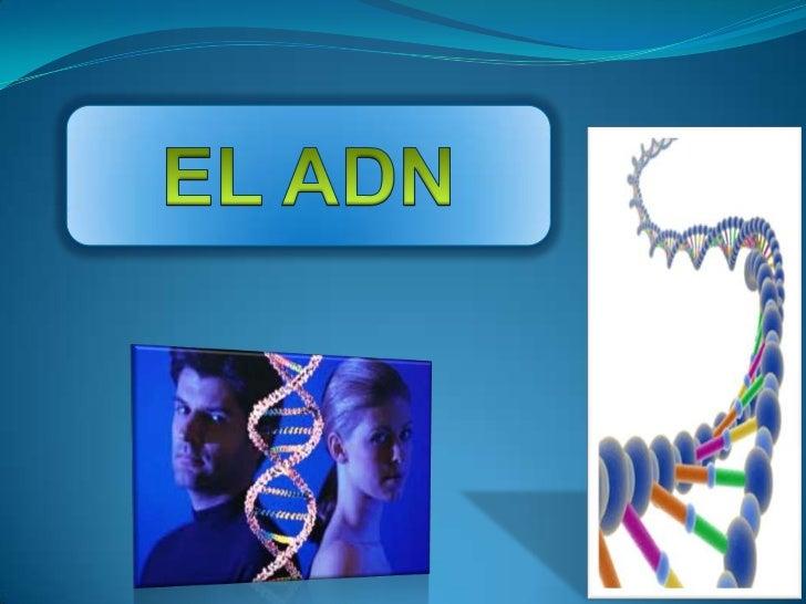 Origen DNA es un polímero integrado por unidades monoméricas  llamadas nucleótidos (poli nucleótidos). Cada nucleótido t...