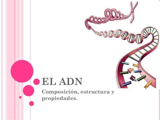Adn Estructura Y Función Conceptos Básicos De Genética