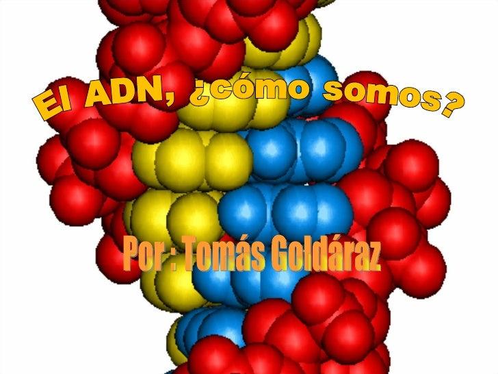 El ADN, ¿cómo somos? Por : Tomás Goldáraz