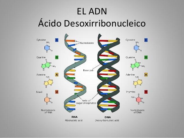 la replicacion del adn es anabolica o catabolica