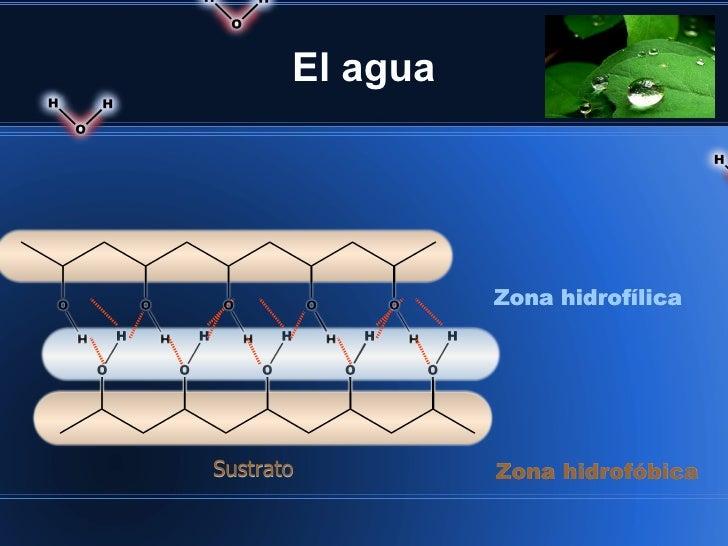 El agua                 Zona hidrofílicaSustrato         Zona hidrofóbica