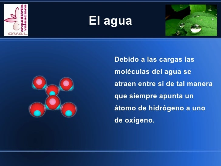 El agua    Debido a las cargas las    moléculas del agua se    atraen entre si de tal manera    que siempre apunta un    á...