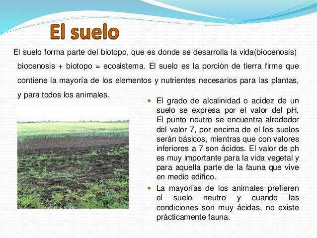 El agua aire suelo y su relaci n con los seres vivos for Como se forma y desarrolla el suelo