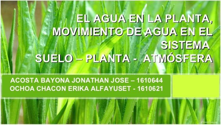 EL AGUA EN LA PLANTA,        MOVIMIENTO DE AGUA EN EL                         SISTEMA      SUELO – PLANTA - ATMÓSFERAACOST...