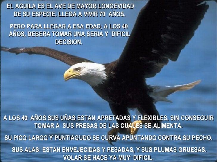 EL AGUILA ES EL AVE DE MAYOR LONGEVIDAD DE SU ESPECIE. LLEGA A VIVIR 70  AÑOS. PERO PARA LLEGAR A ESA EDAD, A LOS 40  AÑOS...