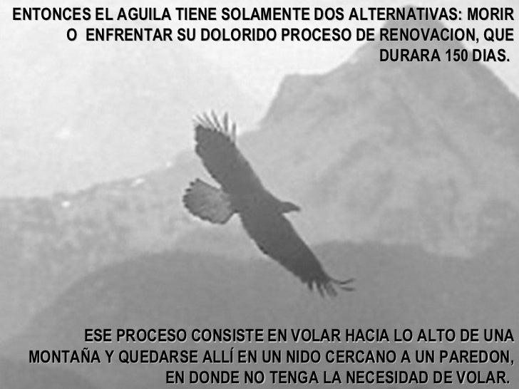 ENTONCES EL AGUILA TIENE SOLAMENTE DOS ALTERNATIVAS: MORIR O  ENFRENTAR SU DOLORIDO PROCESO DE RENOVACION, QUE DURARA 150 ...