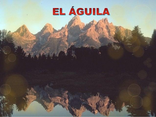 EL ÁGUILA ES EL AVE DE MAYOR LONGEVIDADEL ÁGUILA ES EL AVE DE MAYOR LONGEVIDAD DE SU ESPECIE. LLEGA A VIVIR 70 AÑOS.DE SU ...