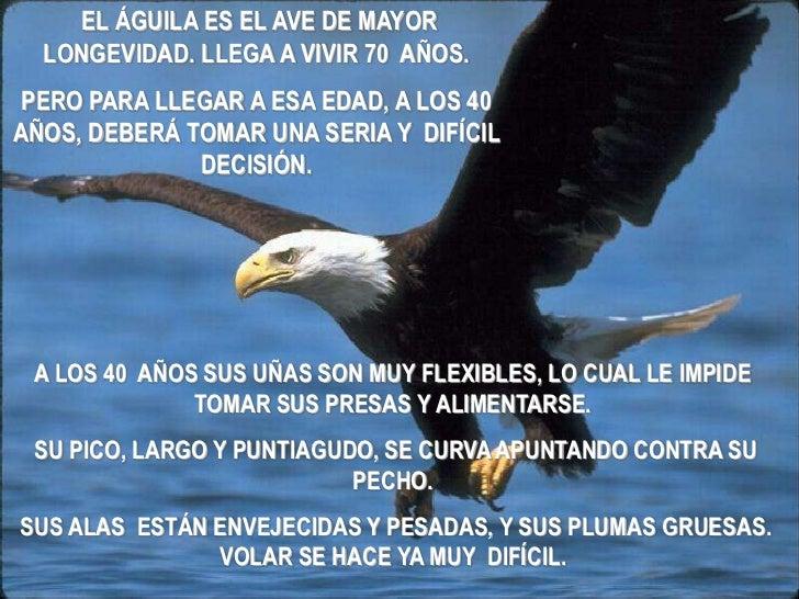 EL ÁGUILA ES EL AVE DE MAYOR  LONGEVIDAD. LLEGA A VIVIR 70 AÑOS. PERO PARA LLEGAR A ESA EDAD, A LOS 40AÑOS, DEBERÁ TOMAR U...