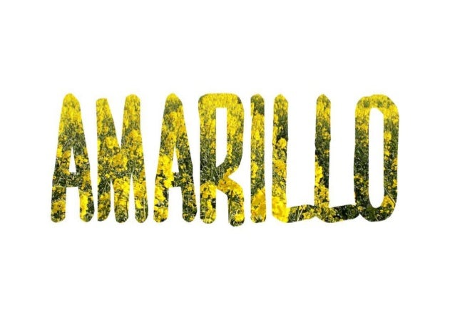 LOS GIRASOLES SON AMARILLOS