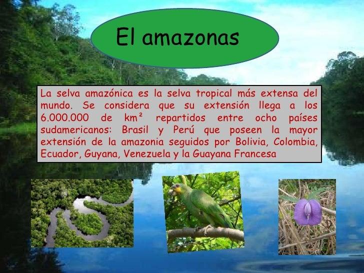 El amazonas <br />La selva amazónica es la selva tropical más extensa del mundo. Se considera que su extensión llega a los...