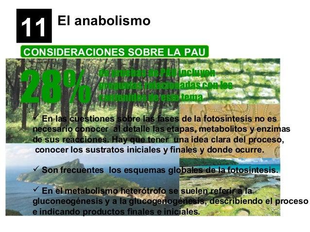 11 El anabolismo CONSIDERACIONES SOBRE LA PAU 28% de pruebas de PAU incluyen preguntas relacionadas con los contenidos de ...